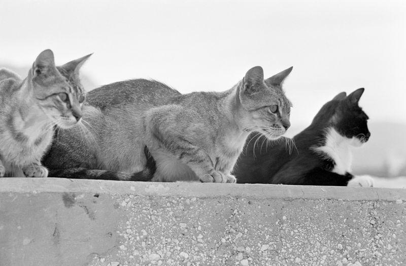 Katzentrio schwarzweiss Katzen