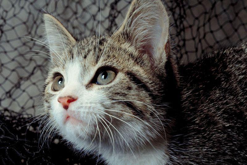 Katzenportrait Katzen