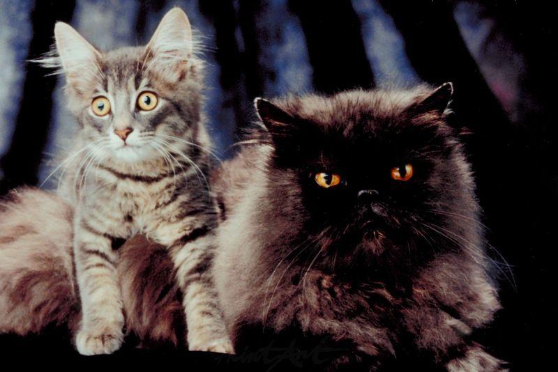 David und Goliath Katzen