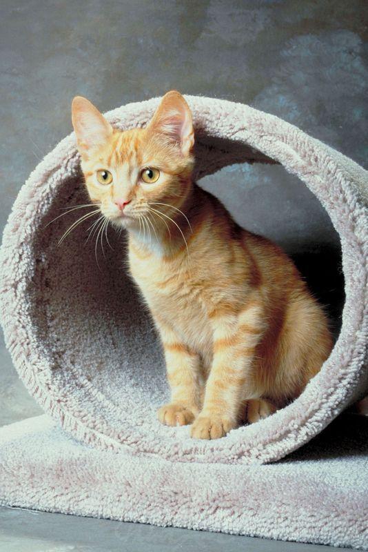 Katze orange Katzen