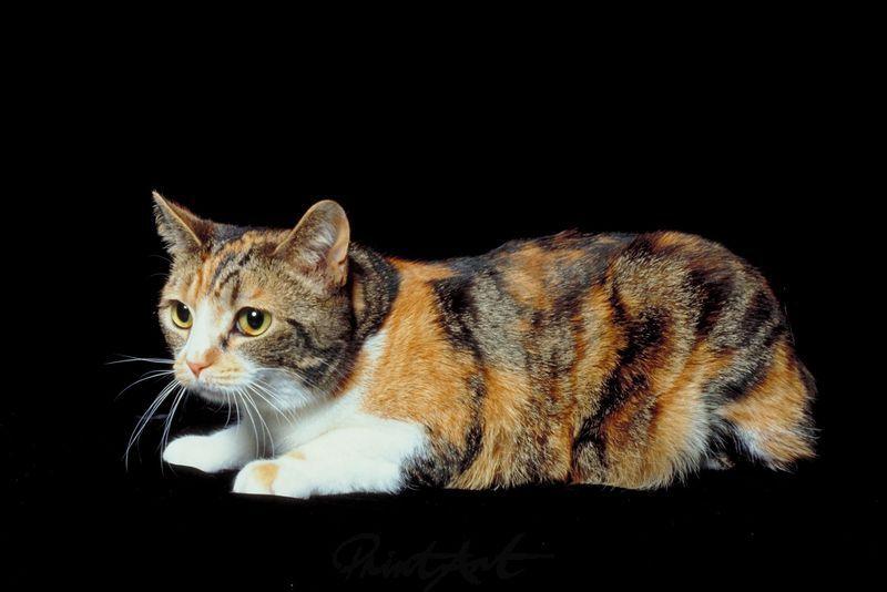 getigerte Katze Katzen