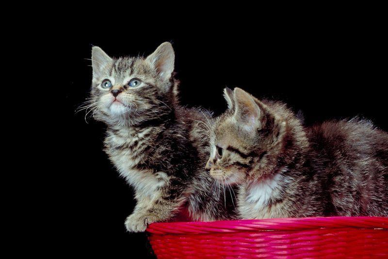 Kätzchen  Korb Katzen