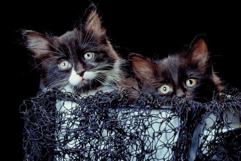 Katzenportrait Fischernetz Katzen