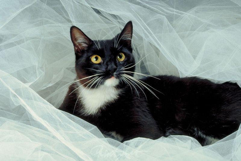 schwarze Katze Katzen