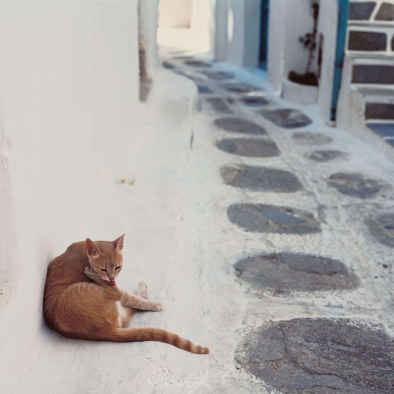 Katze vor Hauswand Katzen