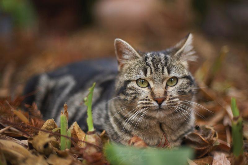 Hauskatze in Laub Katzen