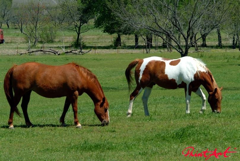 Pferd braun Pferde