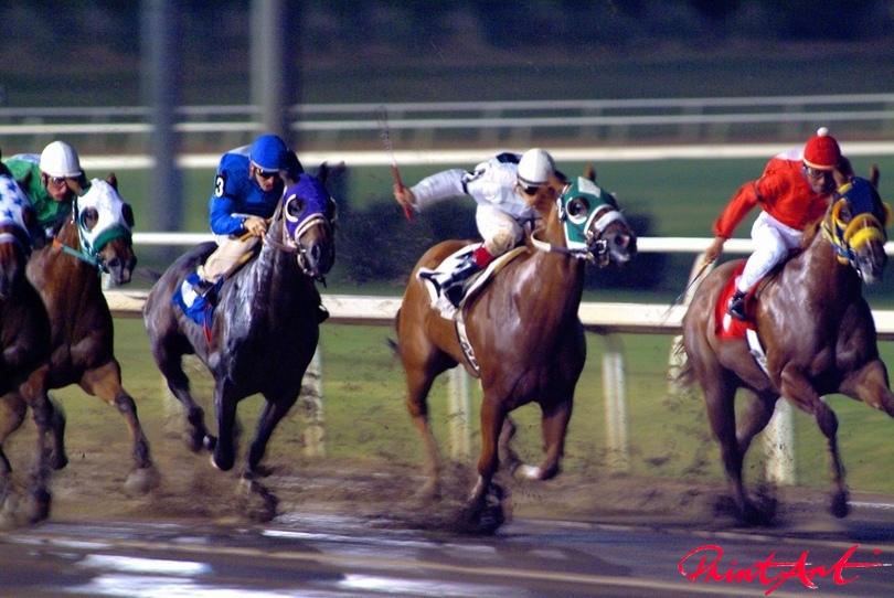 Rennen Pferde