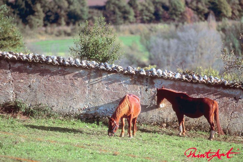 Pferde vor Steinmauer Pferde
