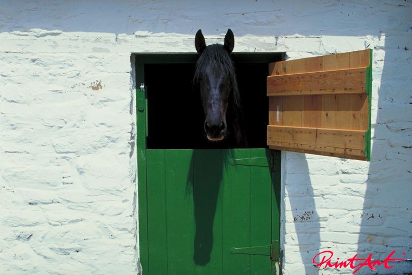Pferd im Stall Pferde