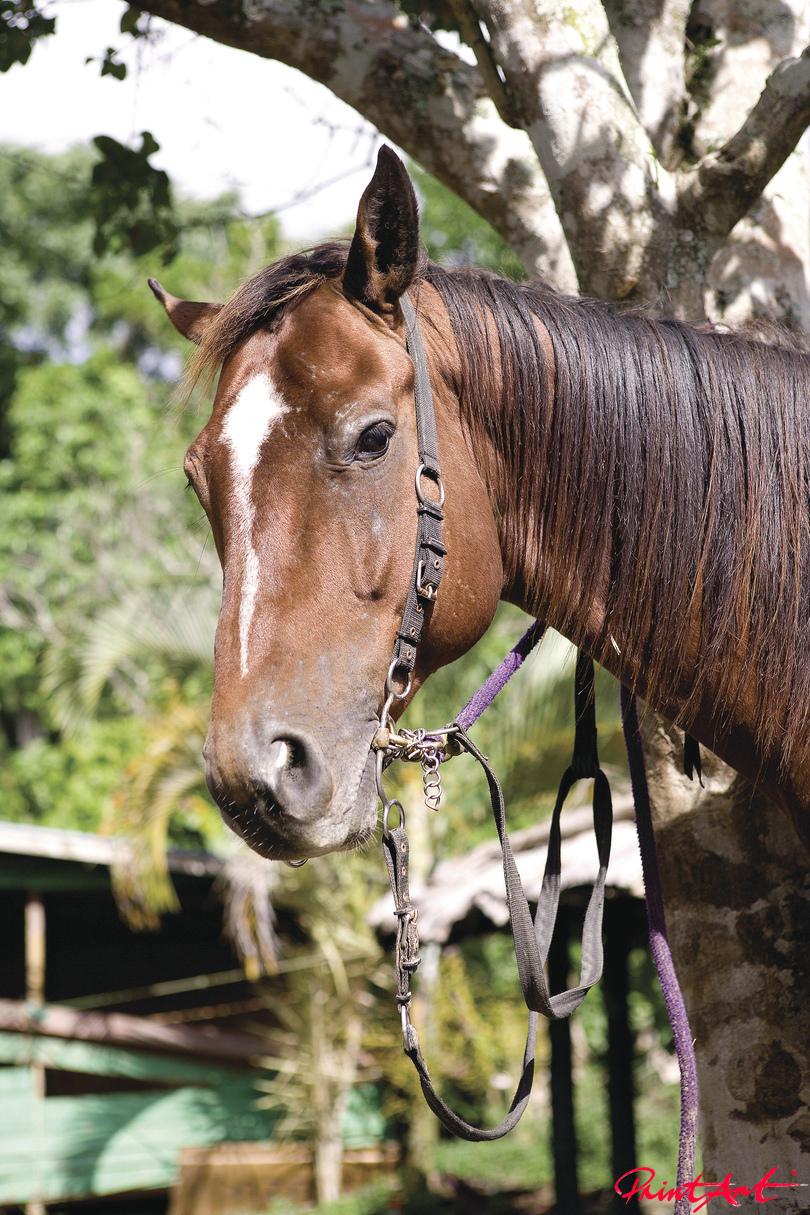Pferdekopf mit Zaum Pferde
