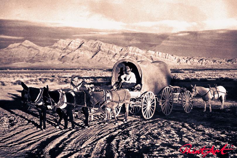 Truckwagen Pferde