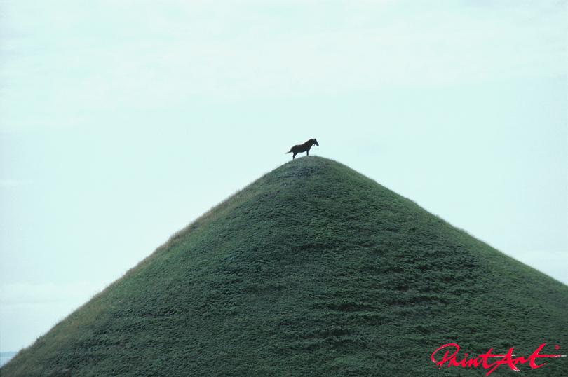 Pferd auf Hügelspitze Pferde