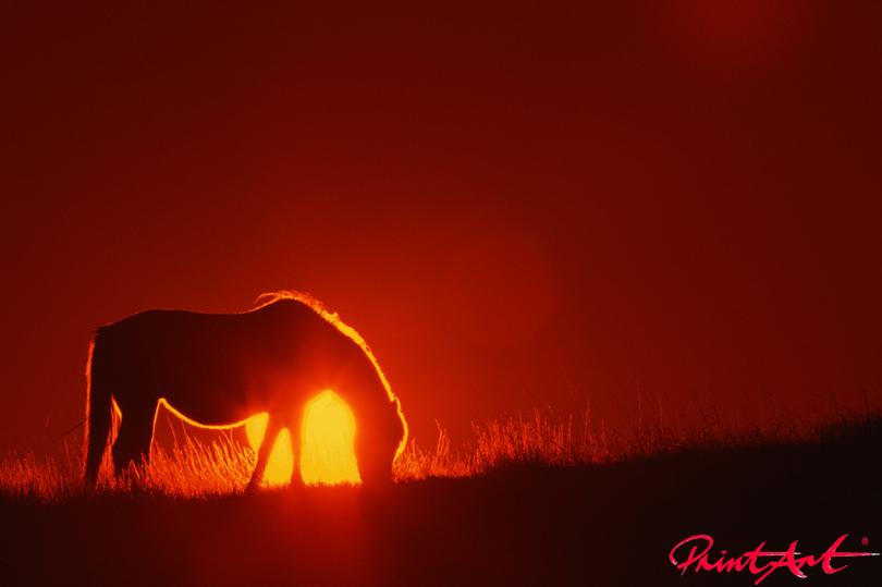 Sonnenuntergang Pferde