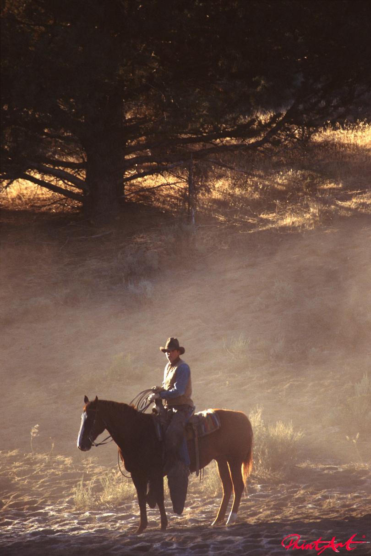Cowboy Pferde