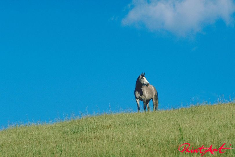 Pferd auf Hügel Pferde