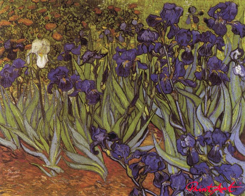 Iris (Schwertlilien) Van Gogh Vincent