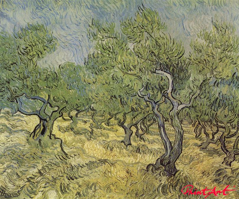 Olivenhain Van Gogh Vincent