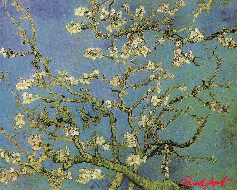 Blühende Mandelbaumzweige Van Gogh Vincent