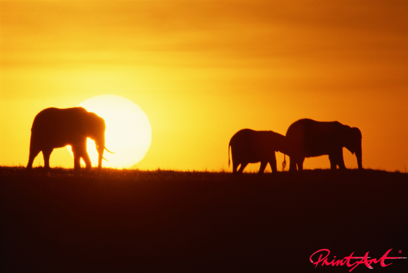 30478688sundown_elephants Sonnenuntergänge