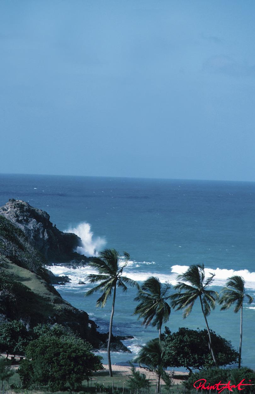 Palmen vor Felsstrand Strände