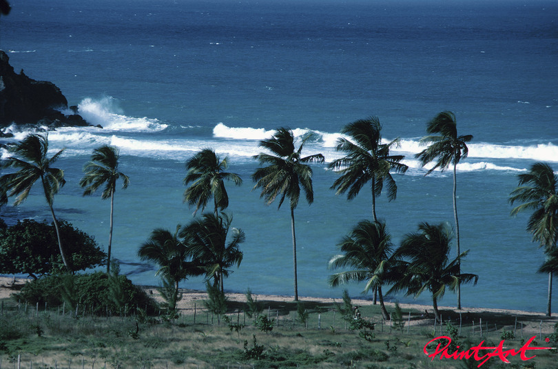 Palmen am Meer Strände