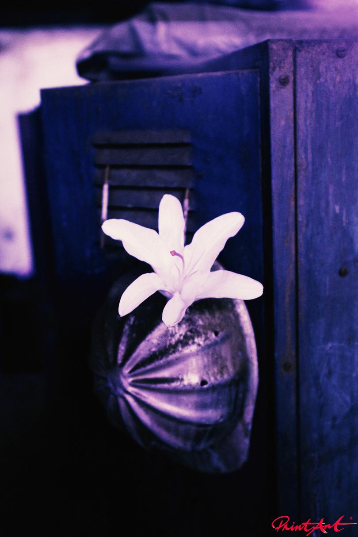 Blume violetter Grund Blumen