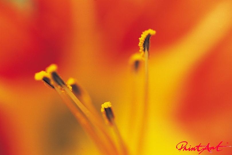 Stempel rotorange Blumen