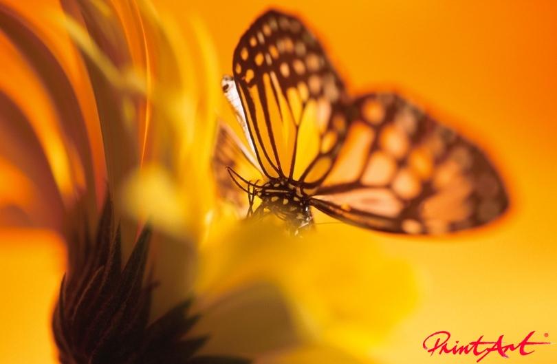 Ausschnitt mit Schmetterling Blumen