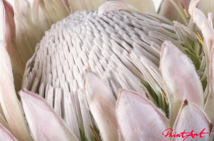 Exotisch rosa weiss Blumen