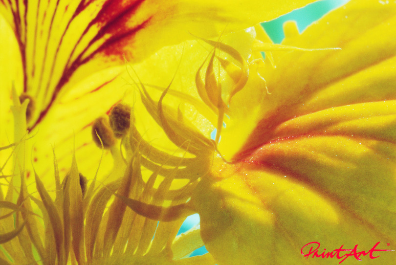 Blütendetail gelb mit rot Blumen