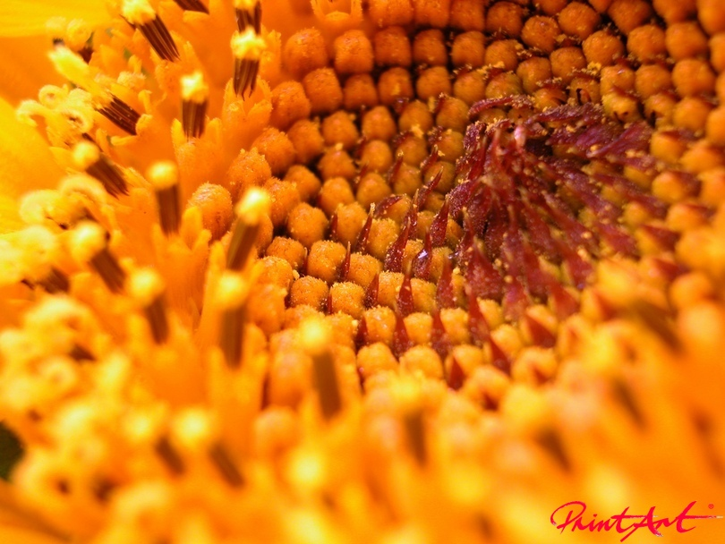 Ausschnitt rot orange Blumen