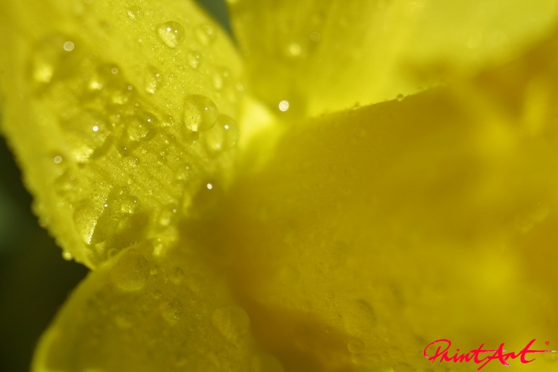 Auschnitt gelb mit Tau Blumen