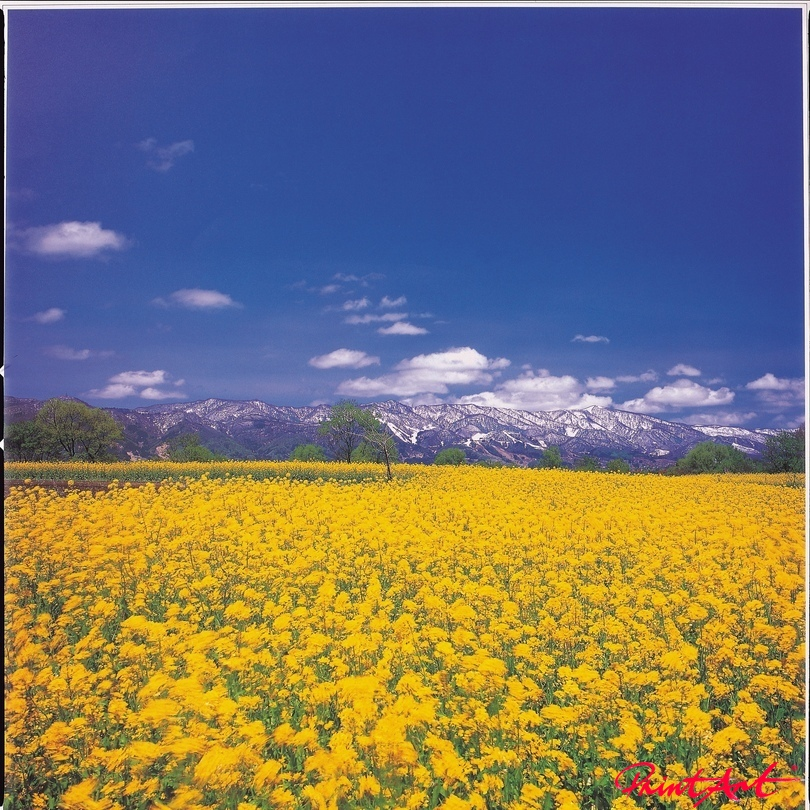 gelbes Blumenmeer Blumen