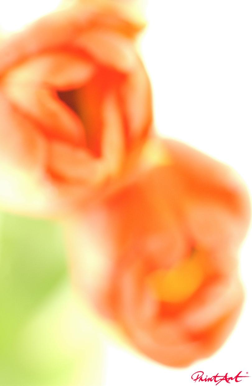 Tulpe verwischt Blumen