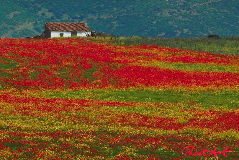 Blumenfeld mit Haus Blumen