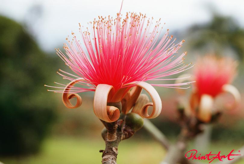 exotische Blüte pink Blumen