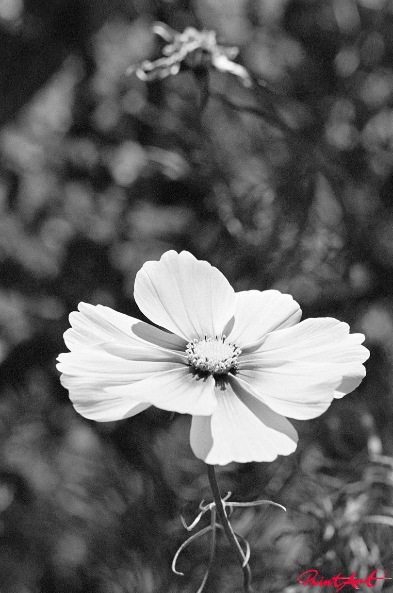 zarte Blüte Blumen