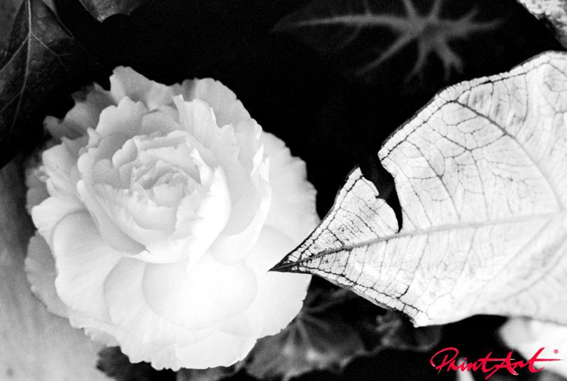 Rose mit Blatt Blumen