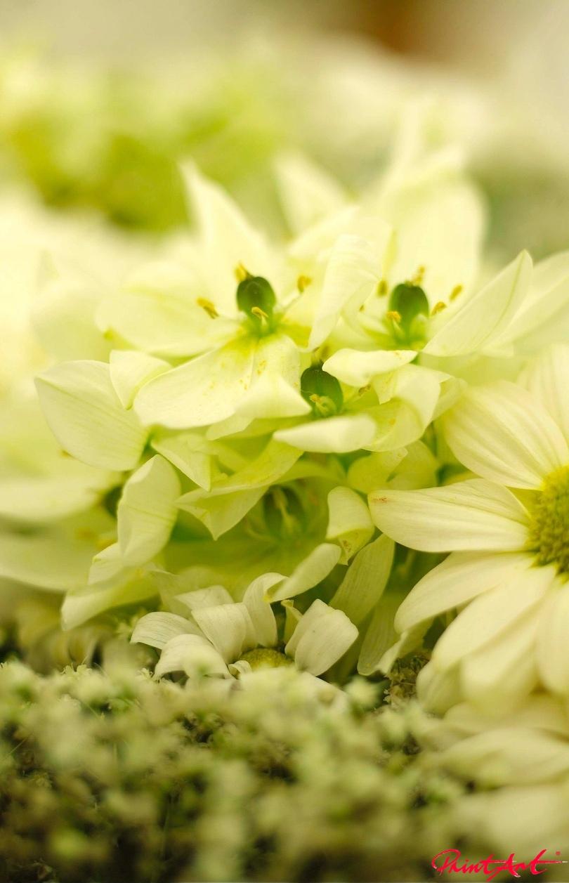 naturweiss Blumen