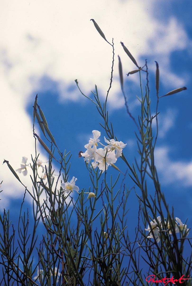 Wiesenblume Blumen