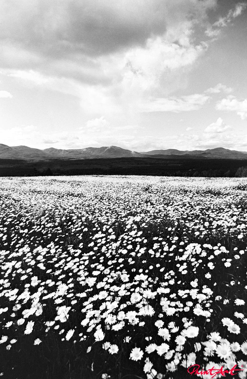 Blumenwiese Berge