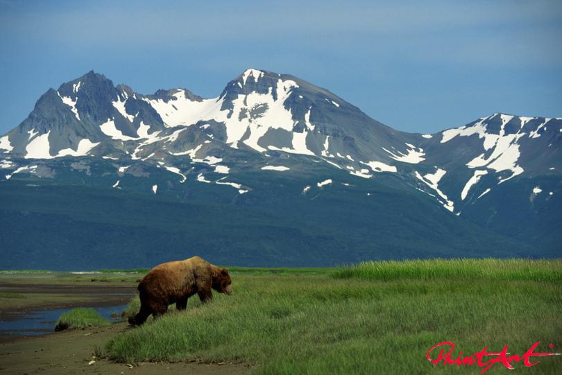 Bär Berge