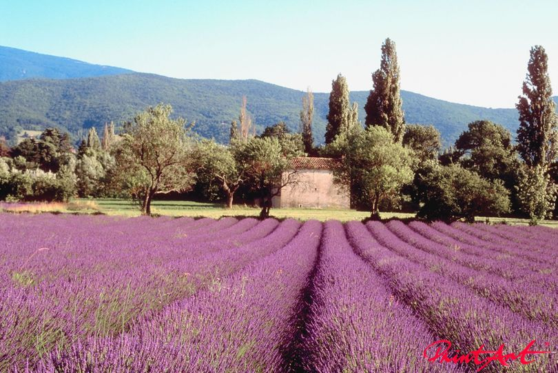 Lavendelfeld Berge