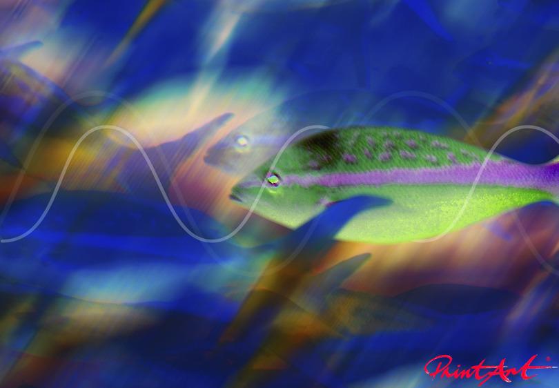 Leuchtfische Meerestiere