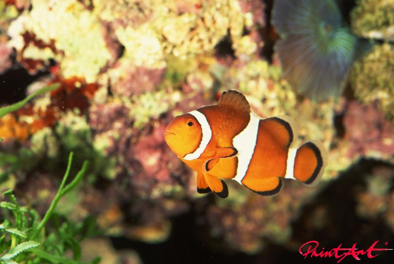 Nemo Meerestiere