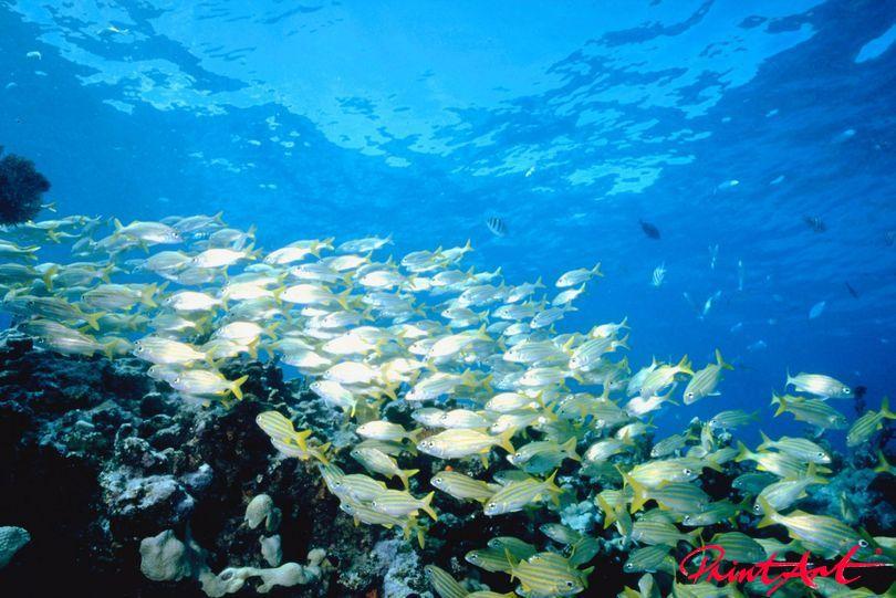 Schwarm unter Wasser Meerestiere