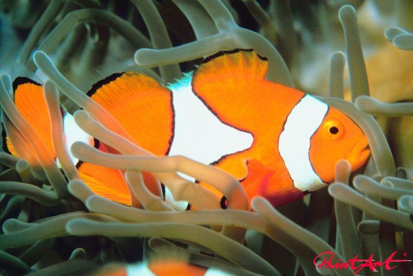 Nemo nah Meerestiere