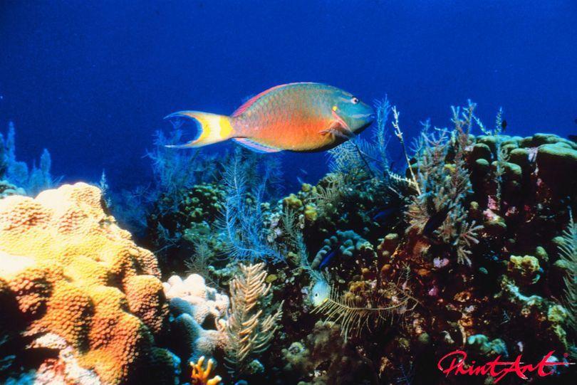 blau orange Meerestiere