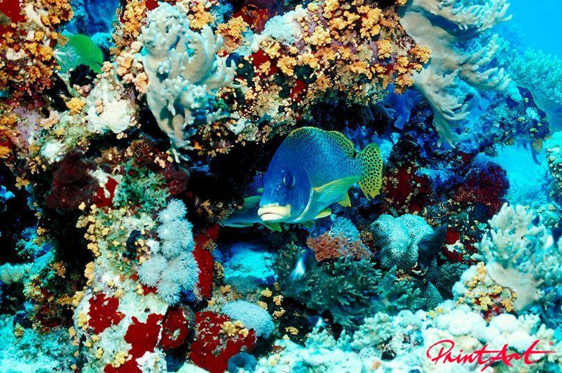 vor bunten Korallen Meerestiere